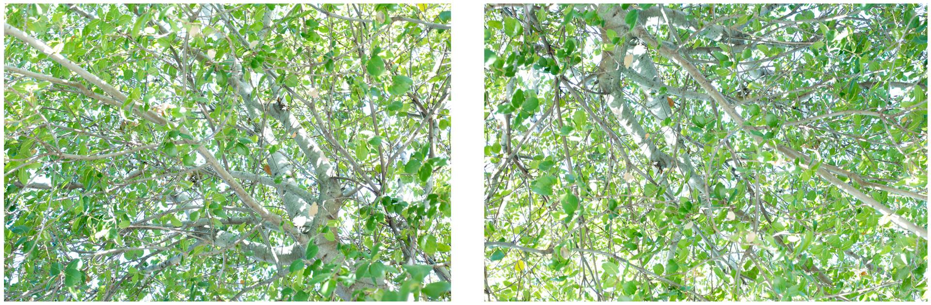 "23. ""The Greening"", 2014, by Ryan J. Bush"