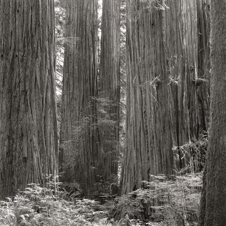 """Tree Portrait #7"", 2004, by Ryan J. Bush"