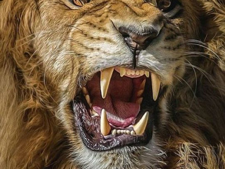 The Lion's Roar: Fully Speaking our Truth