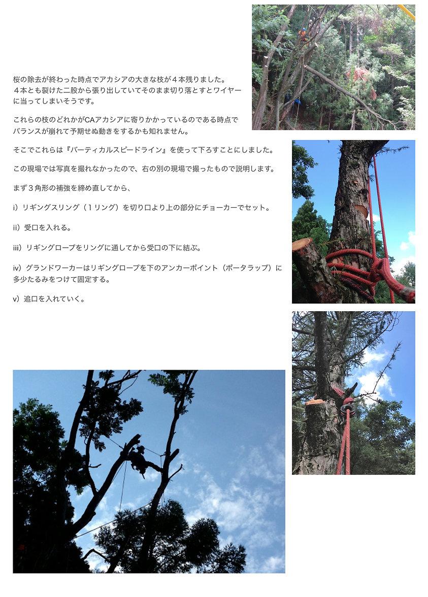 rigging_JP_4.jpg
