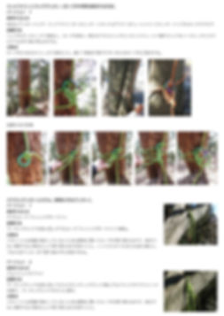 21. SRTバンザイ JP 3.jpg