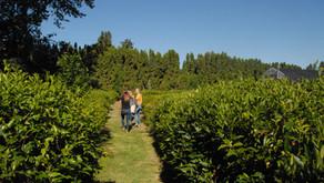 Portland/Eugene Oregon Tea Festival & US League of Tea Growers meeting
