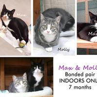 Max & Molly.jpg