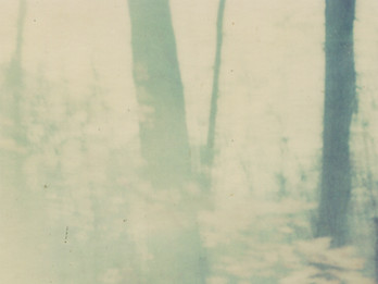 colleen vandenberg | spring trees
