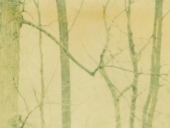 colleen vandenberg | winter trees