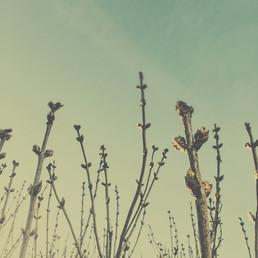colleen vandenberg | buds