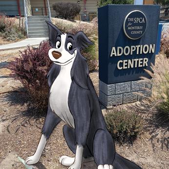 SPCA Monterey County