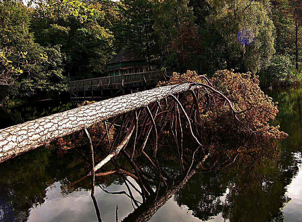 Fallen tree at Lake Gardno, Baltic Coast, Poland