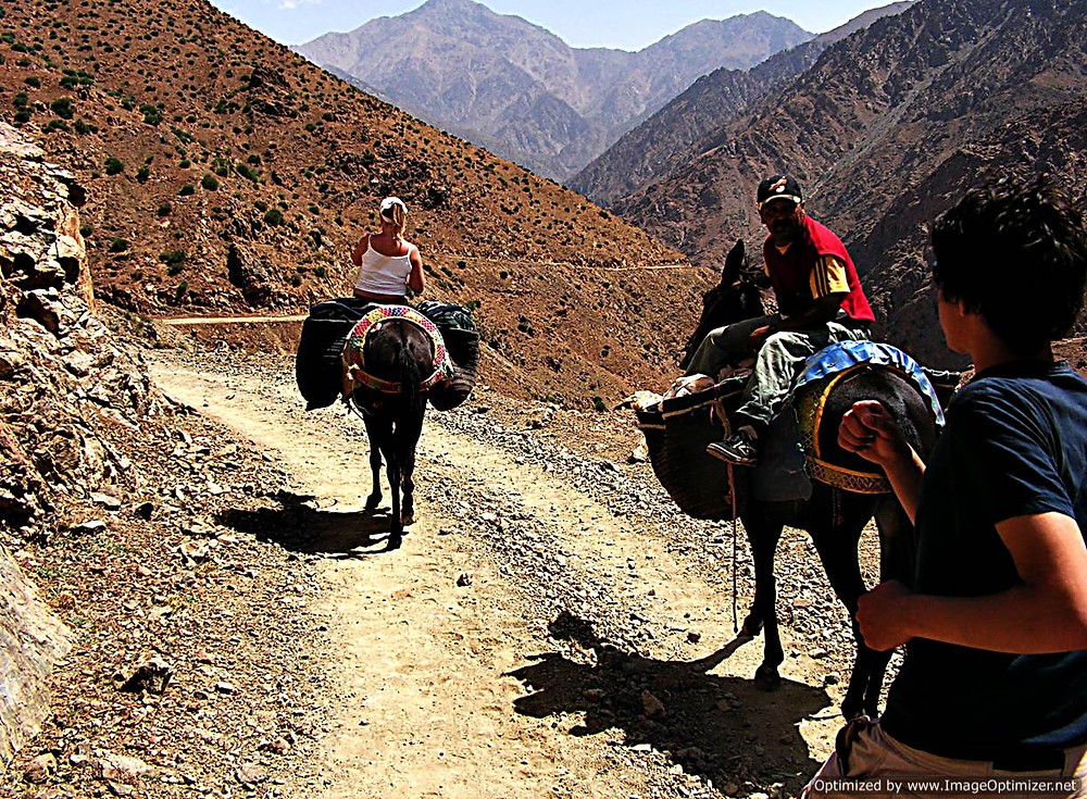 Mule travel, Atlas Mountains, Morocco