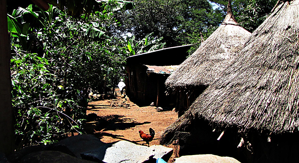 Village on an island in Lake Tana, central Ethiopia