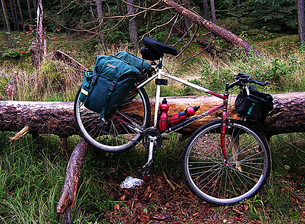 Forest bike trail, near Kolobrzeg, Baltic region, northern Poland