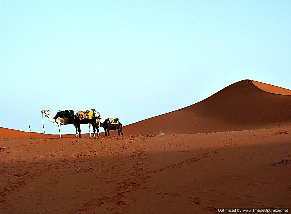 Sahara Desert, Merzouga, Morocco