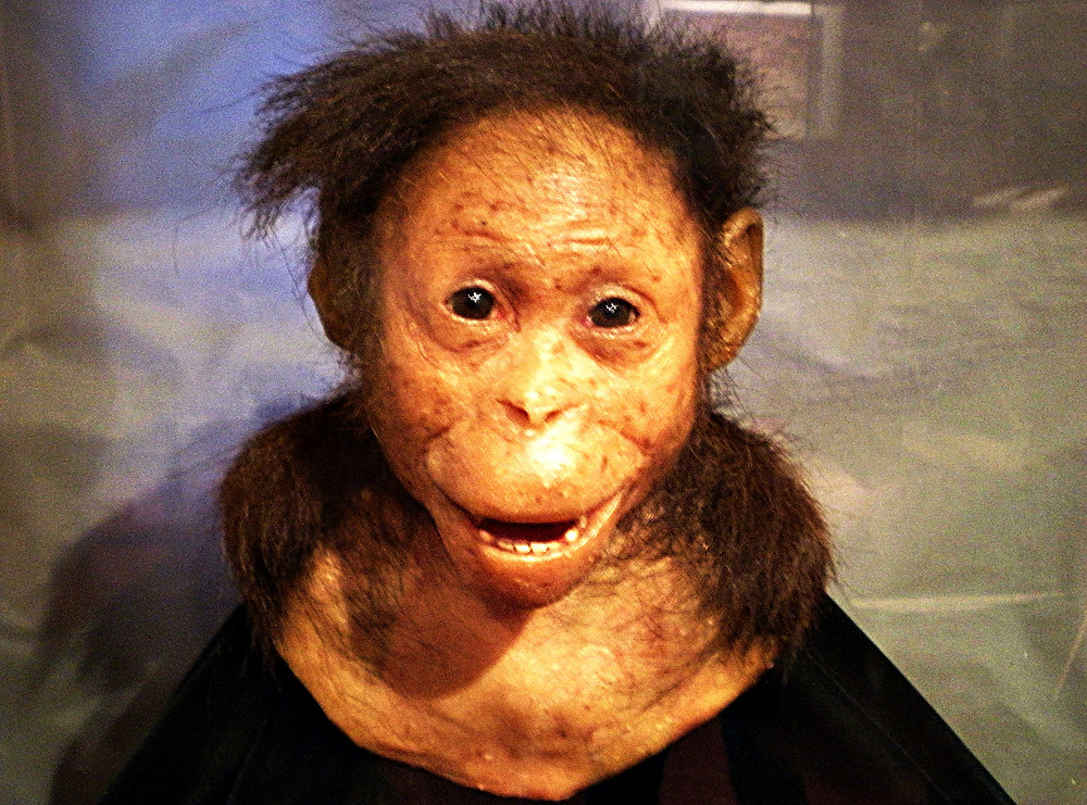 'Lucy', the world's oldest known hominid, in the National Museum, Addis Ababa, Ethiopia