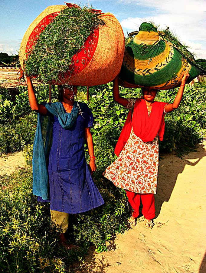 Indian women collecting grass, Agra, India