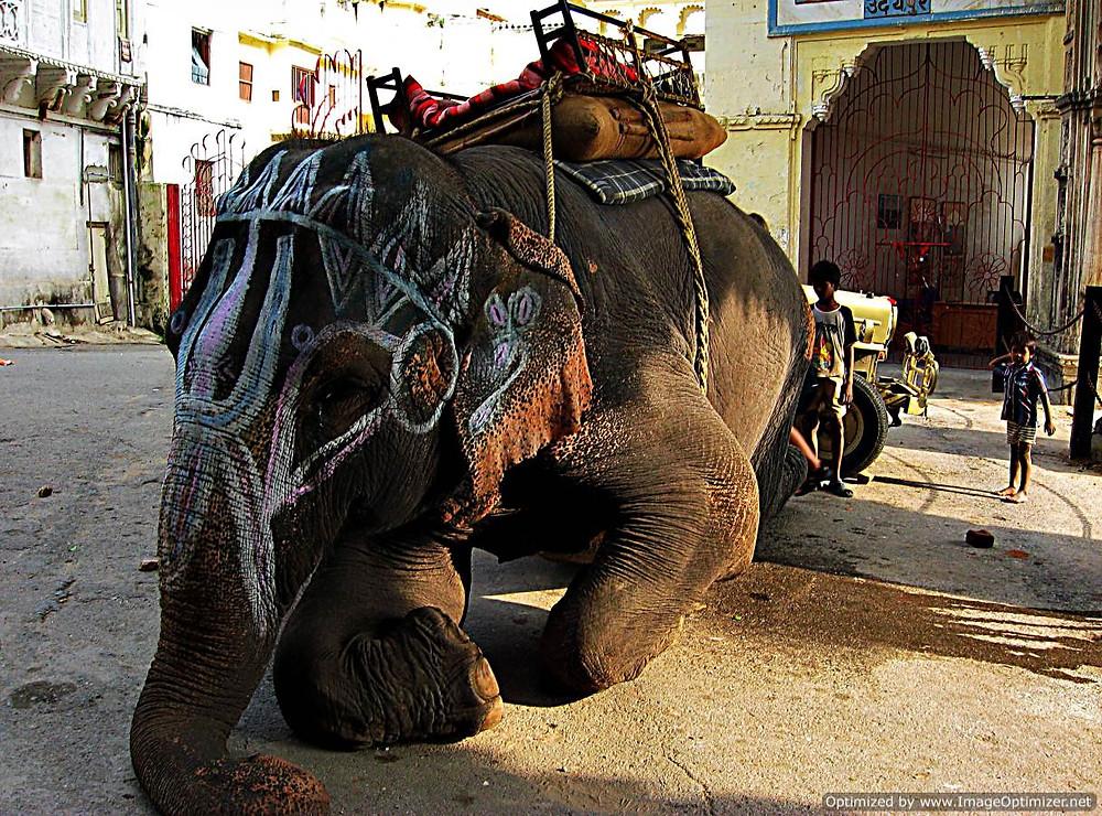 Elephant for tourists, Delhi, India