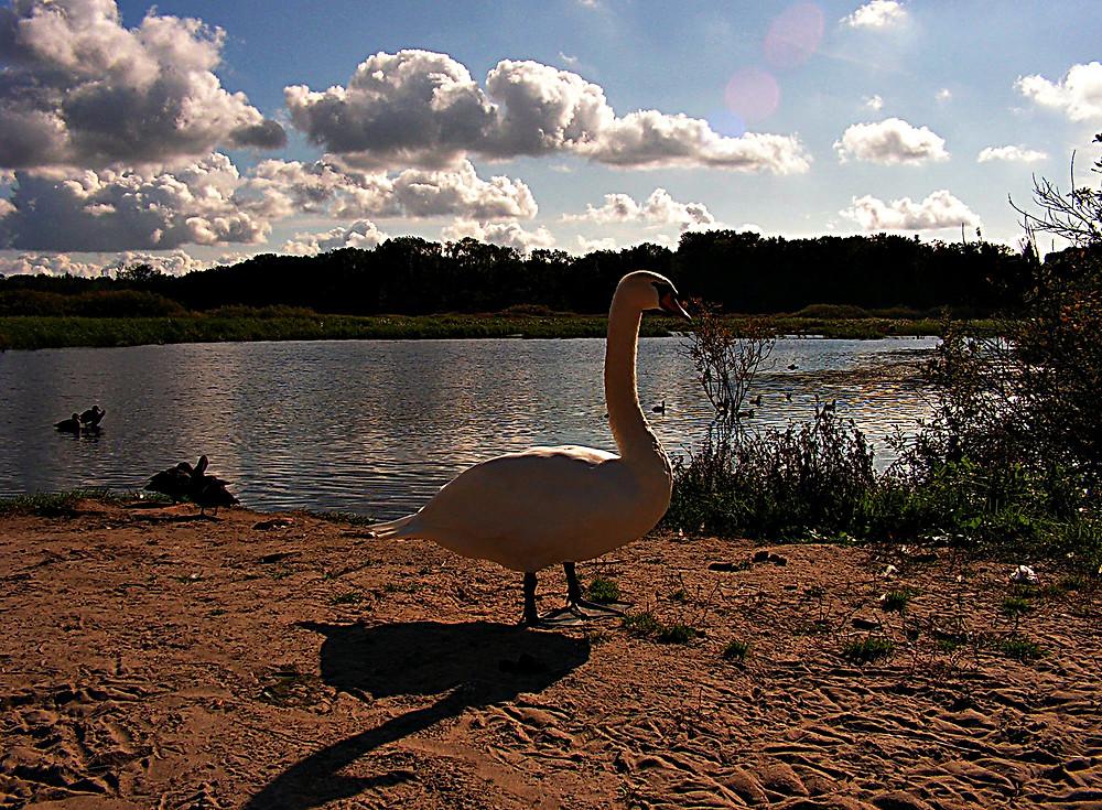 Lake near the Baltic Sea, northern Poland