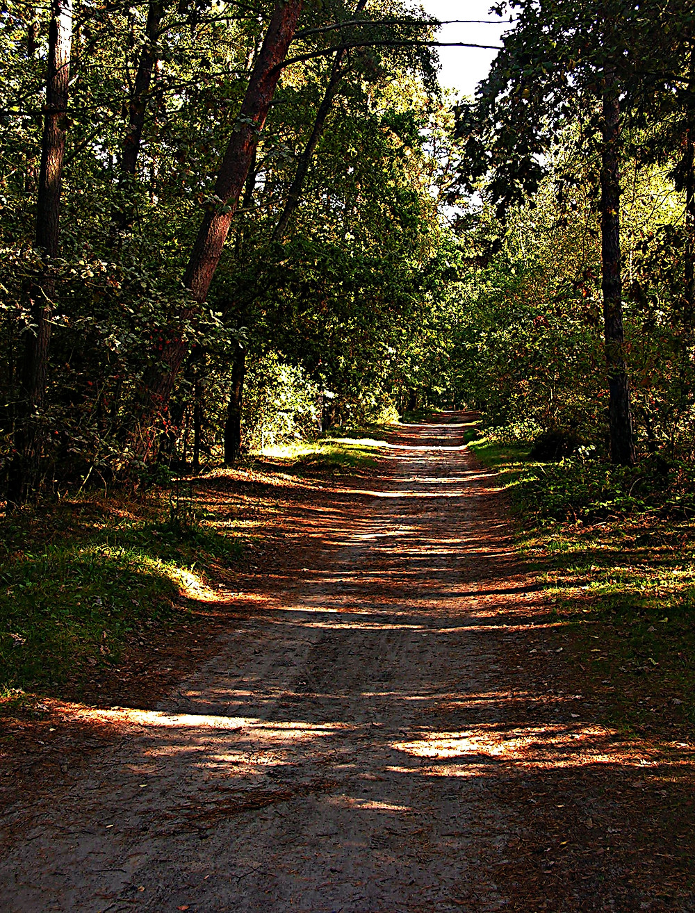 Forest trail to the east of Swinoujscie, Baltic Coast, Poland