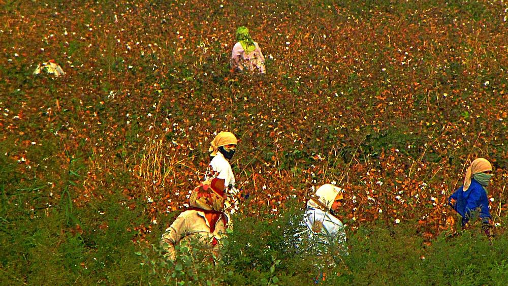 Cotton Workers in Uzbek fields in September, Uzbekistan