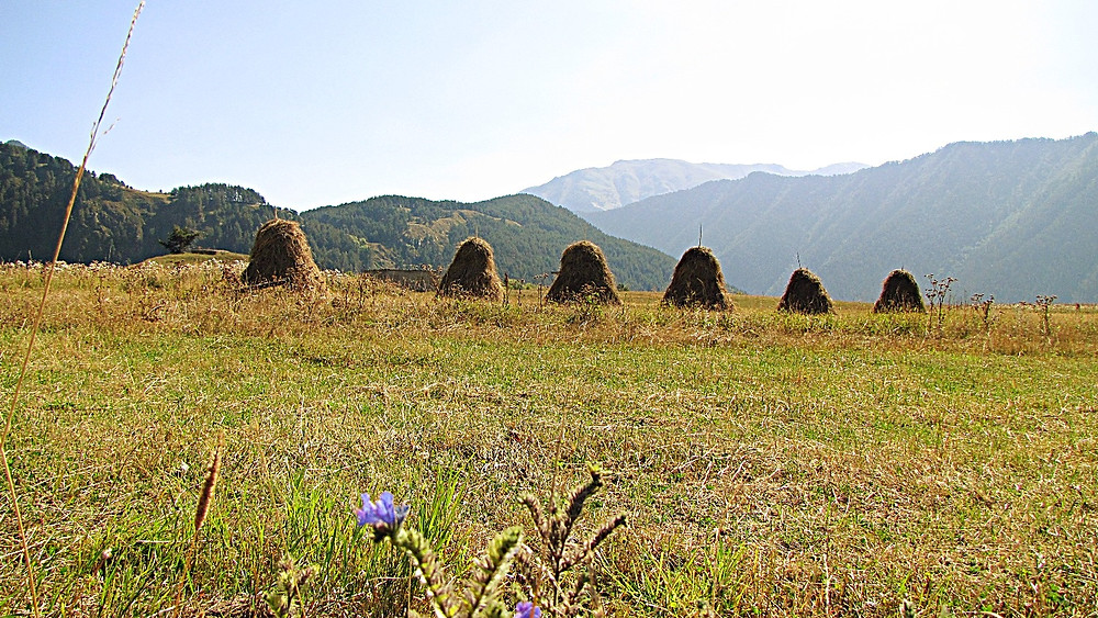 Hay bales, near Omalo, Tusheti, Georgia