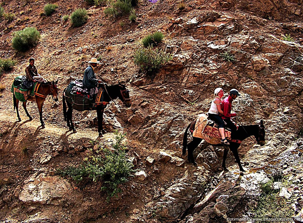 Mules in the Atlas Mountains, Morocco