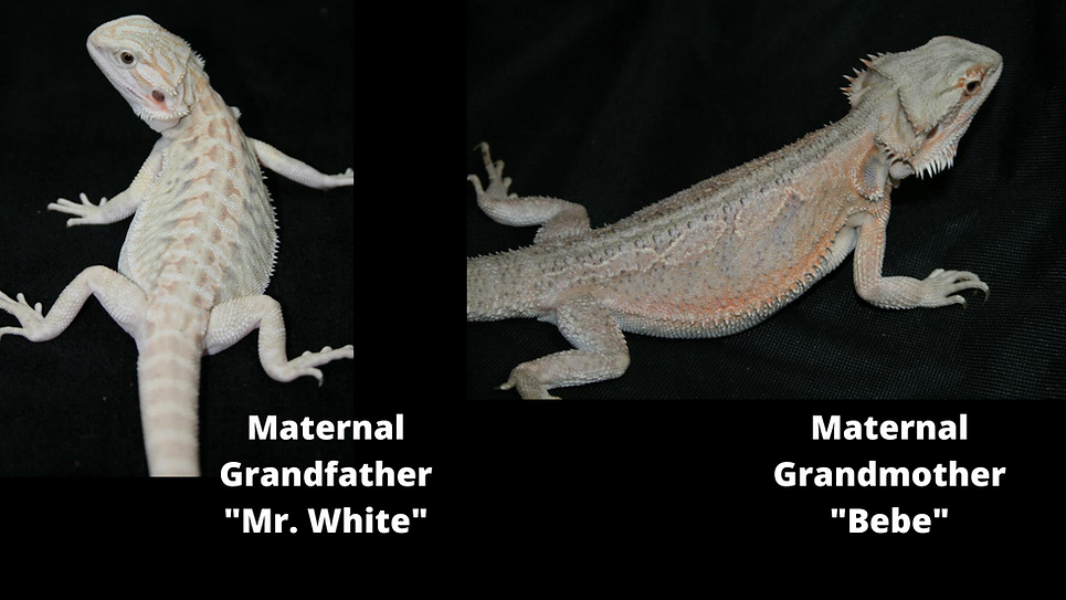 Maternal Grandfather Mr. White .png