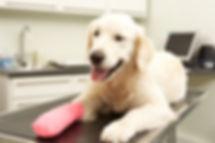 ניתוח אורטופדי לכלב