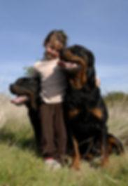 סוציאליזציה של כלבים