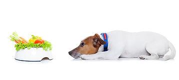 דיאטה לכלבים