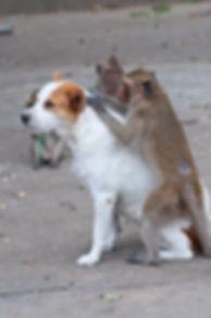 פרעושים לכלב
