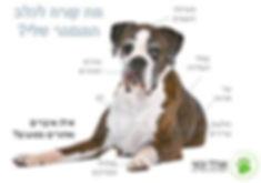 איך לטפל בכלב זקן