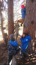 treeclimb.jpg