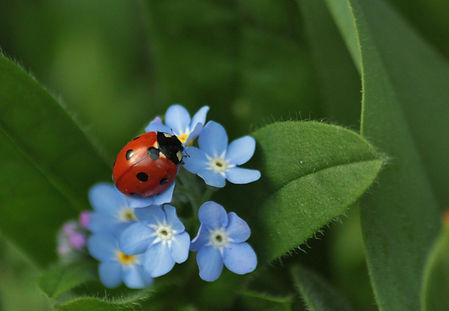 ladybug-308215.jpg