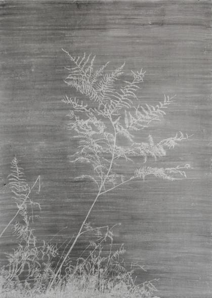 The garden of shadows (Fougère) fusain et gomme mie de pain sur papier de pierre 110 x 160 cm 2021