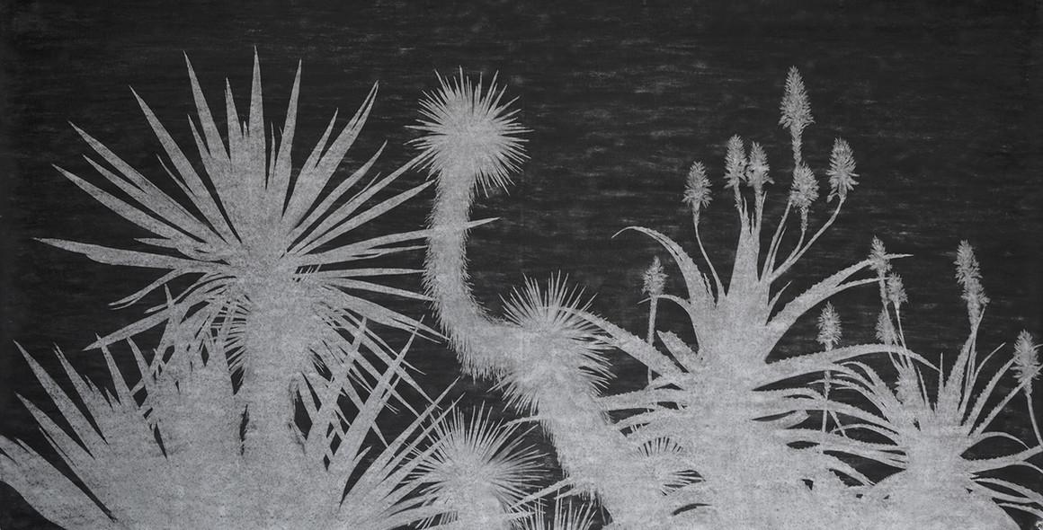 The garden of shadows (Antipolis) fusain  150 x 302 cm 2021
