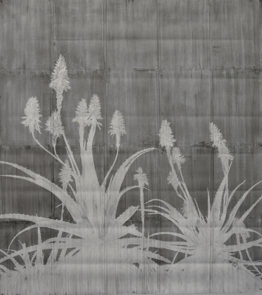 The garden of shadows (Aloès) fusain sur papier de pierre 160 x 150 cm 2021