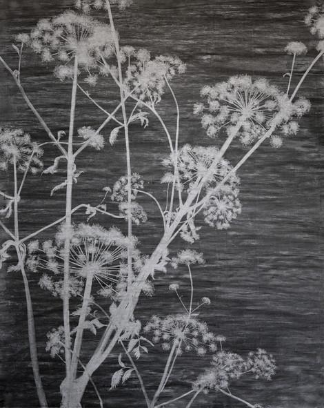 The garden of shadows (Angelica sylvestra) fusain 152 x 190 cm 2020