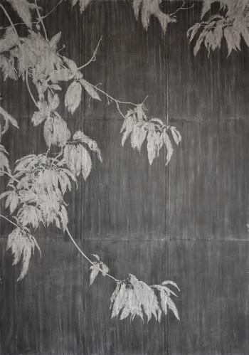 The garden of shadows (chestnut) fusain sur papier de pierre 126 x 178,2 cm 2020