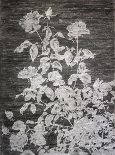 The garden of shadows (Rose tree) fusain et gomme mie de pain 110 x 150 cm 2020