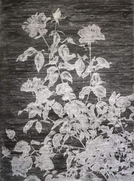 The garden of shadows (Rosier) fusain et gomme mie de pain 110 x 150 cm 2020