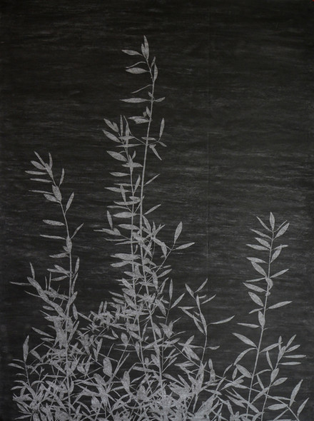 The garden of shadows (Olivier) fusain  200 x 150 cm 2021