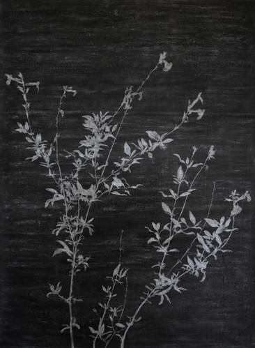 The garden of shadows ( Verbena) fusain et gomme mie de pain 110 x 150 cm 2020