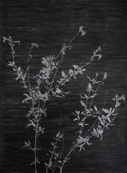 The garden of shadows (Verveine) fusain et gomme mie de pain 110 x 150 cm 2020
