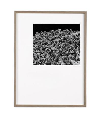 graphite 40 x 50 cm  2020 (collection privée)