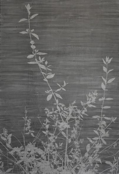 The garden of shadows (Bouquet sauvage) fusain 109 x 160 cm 2020