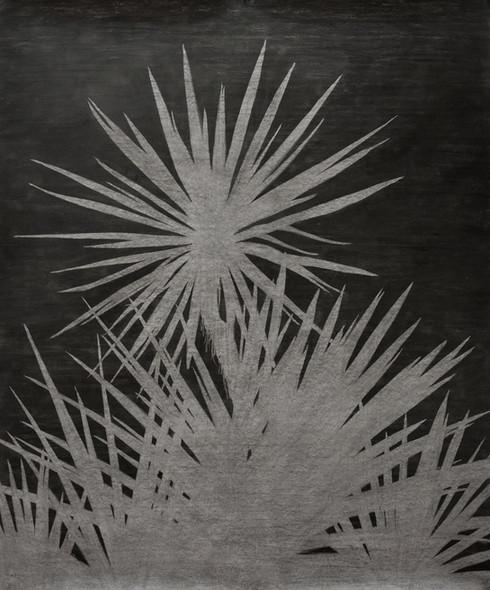 The garden of shadows (Yucca) fusain  180 x 150 cm 2021