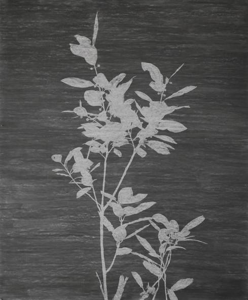 The garden of shadows (Laurier) fusain  180 x 150 cm 2021