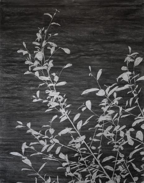 The garden of shadows (Saule) fusain 152 x 190 cm 2020