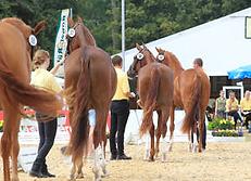 Allevamento cavalli sacrofano
