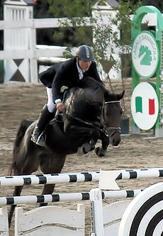 cavalli_salto_invendita