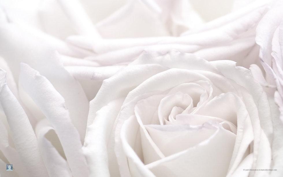 roses background.jpg